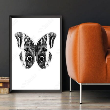 Black Butterfly No:1