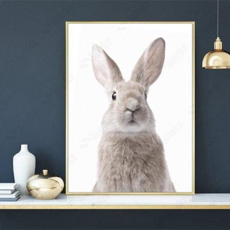 Little Bunny XL