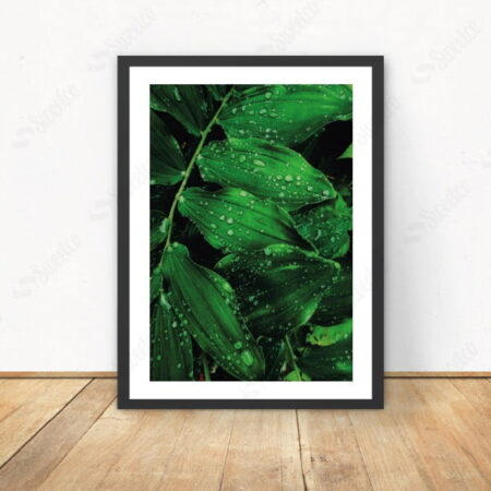 Wet Green Leaves XL