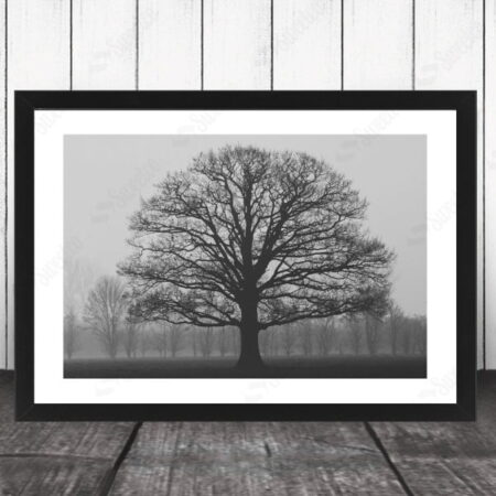 Lonely Tree XL