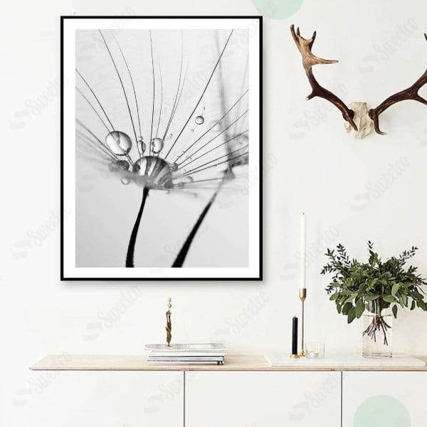 Grey Dandelions