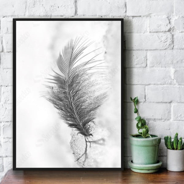 Dull Feather