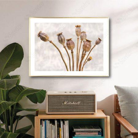Wild Dried Flowers